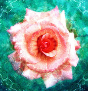 Photomontage, rose blossom, mandala,