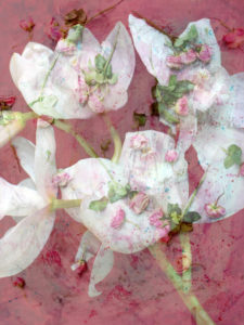 Photomontage of various flowers, pink,