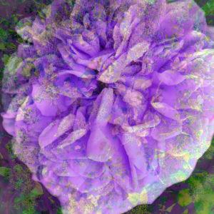 Fotomontage, Blüte, Struktur,