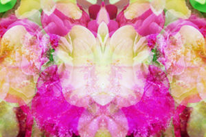 Photomontage of various flowers, mandala,