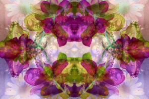 Fotomontage mit Blumen, verschieden, Mandala,