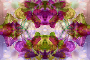 Photomontage with various flowers, mandala,