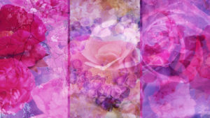 Photomontage, flowers, blossoms, pink, detail,