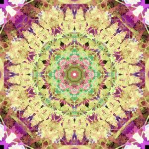 fotografisches Blüten Mandala,