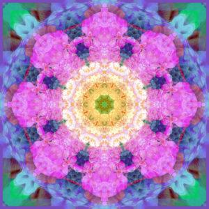 Photographic flower mandala,