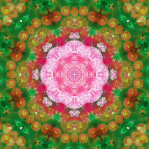Photographic flower mandala,