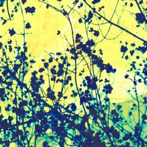 Pflanze vor gelbem Hintergrund, Composing
