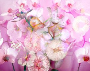 Blüten Composing