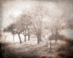 Trees, landscape, vintage, sepia toned