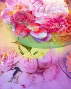 Fotomontage, Blüten, mehrfarbig