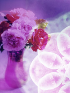 Fotomontage, Mehrfachbelichtung, Blüten, mehrfarbig, Detail,