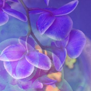 Photomontage, multiple exposure, flowers, multicolored, detail,