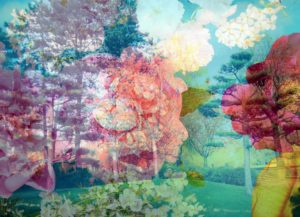 composing, garden, trees, flowers, blossoms, color filter, turquoise,