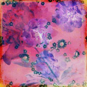 Composing, Blüten, unterschiedlich, Detail, rot, violett,