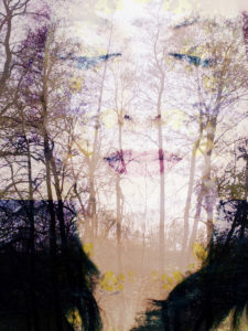 Composing, portrait of a woman, trees, detail,