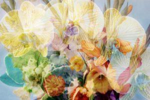 Composing, Blüten, unterschiedlich