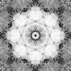 Flower Mandala, composing, white, gray,