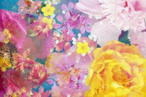 Composing, Blüten, unterschiedlich, Detail, pink, gelb,