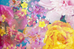 Compososing, flowers, different, pink, detail, yellow,