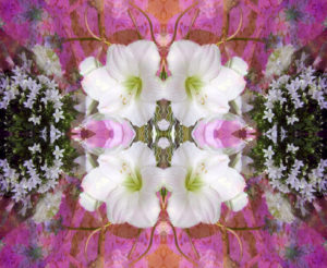 Blütenmandala, Composing, weiß, pink,
