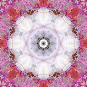 Blütenmandala, Composing, weiß, pink, rosa,