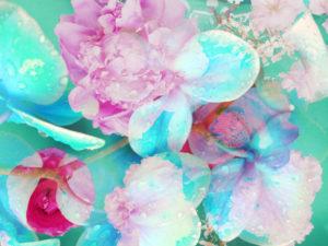 Composing, Blüten, unterschiedlich, Detail, pink, türkis,