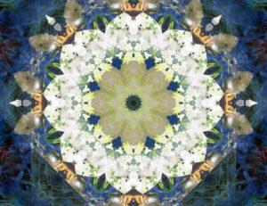 Blütenmandala, Composing, blau, gelb, weiß,