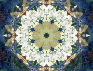 Flower Mandala, composing, blue, Yellow, White,