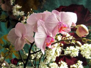 Blumen, unterschiedlich, Orchideenzweig, Detail,