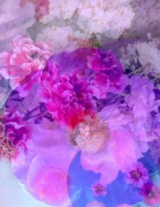 Composing, Blüten, unterschiedlich, Detail, pink,