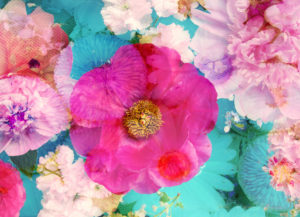 Composing, Blüten, unterschiedlich, Detail,