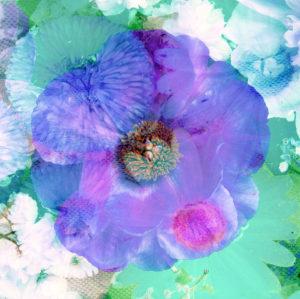 Composing, Blüten, unterschiedlich, Detail, blau, lila,