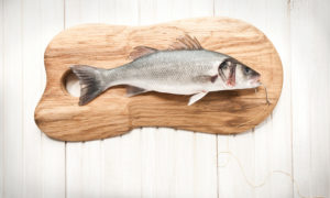 Animal preparation, fishing, wolf perch, fishing, hook, wooden board, wall, decoration,
