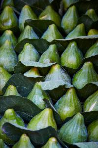 Feigen, Blätter, Nahaufnahme, Bildfüllend, grün, frisch, Italien