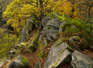 Germany, Hessia, Hessian Rhön nature reserve, UNESCO biosphere reserve, the Steinwand close Poppenhausen, autumn