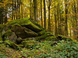 Deutschland, Hessen, Naturpark Hessische Rhön, UNESCO-Biosphärenreservat, Felsgruppe im Buchenwald bei Poppenhausen, Herbst