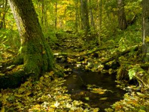 Germany, Bavaria, Rhön Biosphere Reserve, UNESCO biosphere reserve, Long Rhön Nature Reserve, moving autumn foliage in a brook on the Ilmenberg