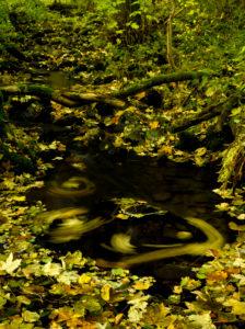 Deutschland, Bayern, Naturpark Bayrische Rhön, UNESCO-Biosphärenreservat, Naturschutzgebiet Lange Rhön, sich drehendes Herbstlaub in einem Bach am Ilmenberg