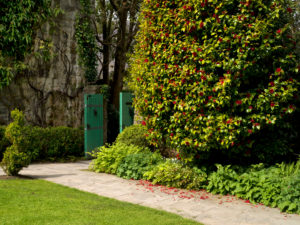 Ireland, Donegal, Glenveagh national park, garden of Glenveagh Castle, green garden gate, garden wall, blossoming rhododendron shrub