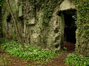 Irland, County Wexford, Ruine im Küstenurwald der Hook Halbinsel, Mauerdurchblick, blühender Bärlauch, Efeu,