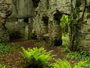 Irland, County Wexford, Ruine im Küstenurwald der Hook Halbinsel, Mauerdurchblick, blühender Bärlauch, Efeu, Farne