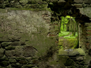 Irland, County Wexford, Ruine im Küstenurwald der Hook Halbinsel, Mauerdurchblick, blühender Bärlauch, Efeu, Farne, Blick auf Steinhütte