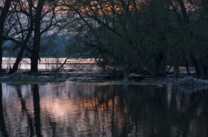 Germany, Brandenburg, Uckermark, Criewen, Lower Oder Valley National Park, old willow trees in the riparian forests near Criewen, evening mood