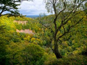 Europe, Sweden, Scania, Söderasen National Park, view of the ravine from Kopparhatten Mountain