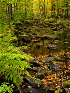 Europa, Schweden, Skane, Nationalpark Söderasen, Schluchtwald im Sprickdal, Bach Skaran mit bemoosten Steinen
