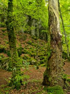 Europe, Sweden, Scania, Söderasen National Park, Sprickdal, ravine, forest