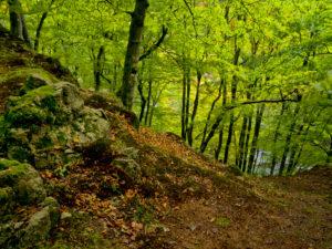 Europa, Schweden, Skane, Nationalpark Söderasen, Schluchtwald im Sprickdal
