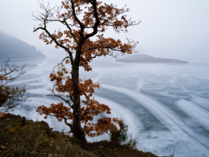 Europe, Germany, Hesse, Waldeck, Kellerwald-Edersee National Park, copper beech at the Stollmühle, winter atmosphere with ice and snow, ice structures