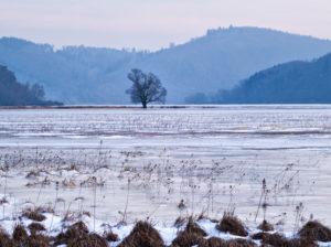"""Europa, Deutschland, Hessen, Vöhl, Nationalpark Kellerwald-Edersee, Wintermorgen am Naturschutzgebiet """"Ederseeufer"""" bei Herzhausen, Salweide"""