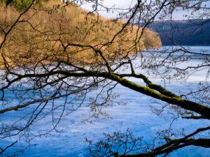 Europa, Deutschland, Hessen, Vöhl, Nationalpark Kellerwald-Edersee, Winterstimmung, Haselnussbaum am Ufer der Wooghölle